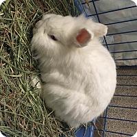 Adopt A Pet :: Cloudy - Mipiltas, CA