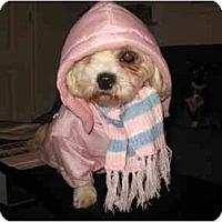 Adopt A Pet :: Lacy - Rigaud, QC