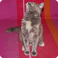 Adopt A Pet :: Liberty - Scottsdale, AZ