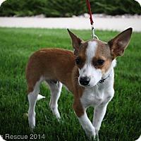 Adopt A Pet :: SVEN - Broomfield, CO