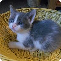 Adopt A Pet :: Autumn - Richland, MI