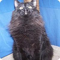 Adopt A Pet :: Twinkle - Colorado Springs, CO