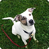 Adopt A Pet :: Rita Bell - Woodland, CA