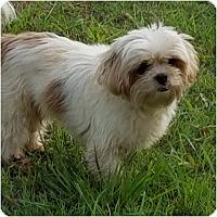 Adopt A Pet :: Chelsea - San Antonio, TX