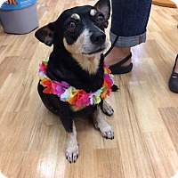 Adopt A Pet :: Little Guy aka Smalls - Waipahu, HI