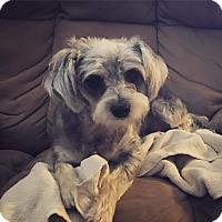 Adopt A Pet :: Cleo - Concord, CA