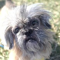 Adopt A Pet :: Oscar 17 (Bonded with Mayer 15) - DeSoto, IA