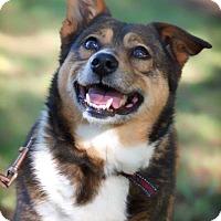 Adopt A Pet :: Pattycakes - Barnesville, GA
