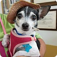 Adopt A Pet :: Lil Mama - Pensacola, FL