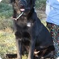 Adopt A Pet :: Nynx - Lewisville, IN