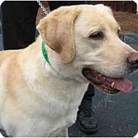 Adopt A Pet :: Angus - Cumming, GA