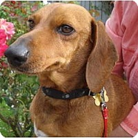 Adopt A Pet :: Marco - San Jose, CA
