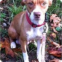 Adopt A Pet :: Angel - Seattle, WA