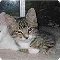 Adopt A Pet :: Jasper (with Socks) - Portland, OR