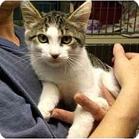 Adopt A Pet :: Abbycadabby - Lombard, IL