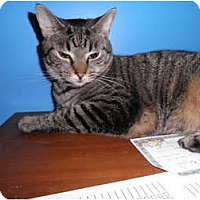 Adopt A Pet :: Josie - Warren, MI