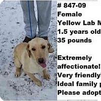 Adopt A Pet :: # 847-09 @ ANIMAL SHELTER - Zanesville, OH
