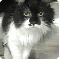 Adopt A Pet :: Pretty Girl - Chesterland, OH
