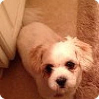 Adopt A Pet :: Sookie - Somers, CT