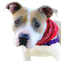 Adopt A Pet :: Lola pending - Sacramento, CA