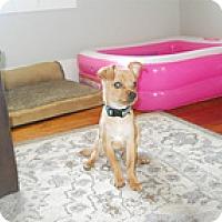 Adopt A Pet :: Ollie - Spring City, TN