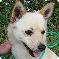 Adopt A Pet :: Honey - Erwin, TN