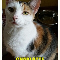 Adopt A Pet :: Charlotte - MADISON, OH