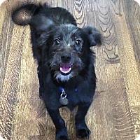 Adopt A Pet :: Donner - Atlanta, GA