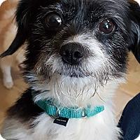 Adopt A Pet :: Kaci-Adoption pending - Bridgeton, MO