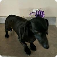 Adopt A Pet :: Molly Beatty - Urbana, OH