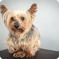 Adopt A Pet :: Zachary - N. Babylon, NY