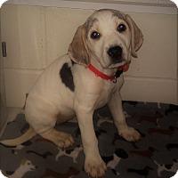 Adopt A Pet :: Erica - Burgaw, NC