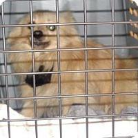 Adopt A Pet :: 339646 LF - Wildomar, CA