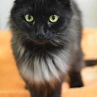 Adopt A Pet :: Black Angel162059 - Atlanta, GA