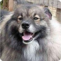 Adopt A Pet :: Manny - Los Altos, CA