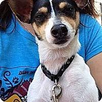 Adopt A Pet :: Jitterbug - Carmel, IN