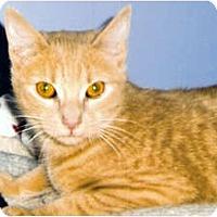 Adopt A Pet :: Cinnamon - Medway, MA