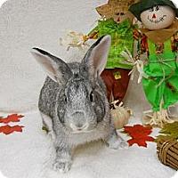 Adopt A Pet :: Smokey - Roseville, CA