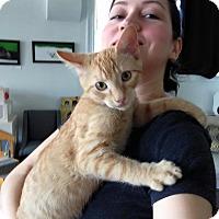 Adopt A Pet :: Warhol - St. Louis, MO