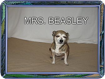 Chihuahua Mix Dog for adoption in Port Clinton, Ohio - MRS BEASLEY