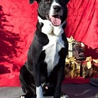 Pit Bull Terrier Mix Dog for adoption in Orland, California - David
