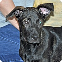 Adopt A Pet :: Rudy - Port Washington, NY