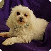 Adopt A Pet :: MICKEY - Covina, CA