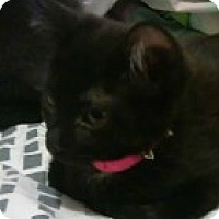 Adopt A Pet :: Leia - McHenry, IL