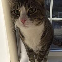 Adopt A Pet :: Macey - Stevensville, MD