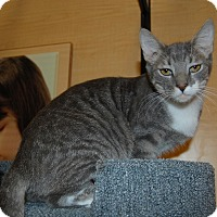 Adopt A Pet :: Tigger - Whittier, CA