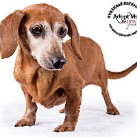 Adopt A Pet :: Bella - Lodi, CA