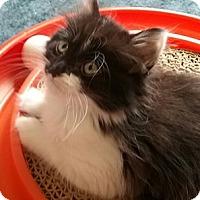 Adopt A Pet :: Almond - North Highlands, CA
