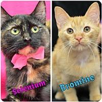 Adopt A Pet :: Bromine170208 - Atlanta, GA