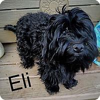 Adopt A Pet :: Eli - Hazard, KY